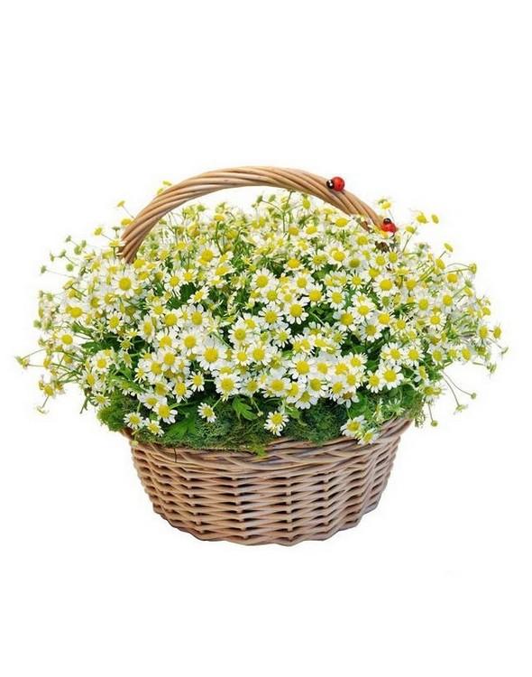 Цветов туапсе, доставка цветов ромашек по киеву недорого